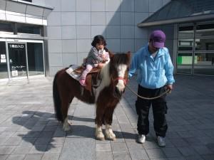 rekimin pony